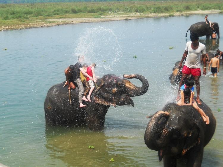 Bathing with elephants in Chitwan