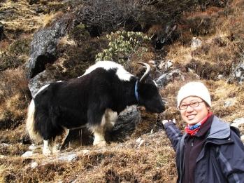 A trekker pointing at Yak during Everest Trek