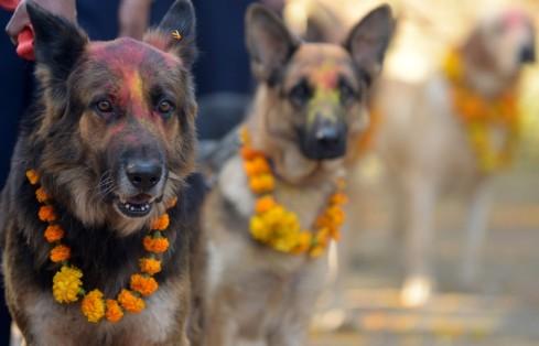 """Khukur """"Dog"""" Tihar"""