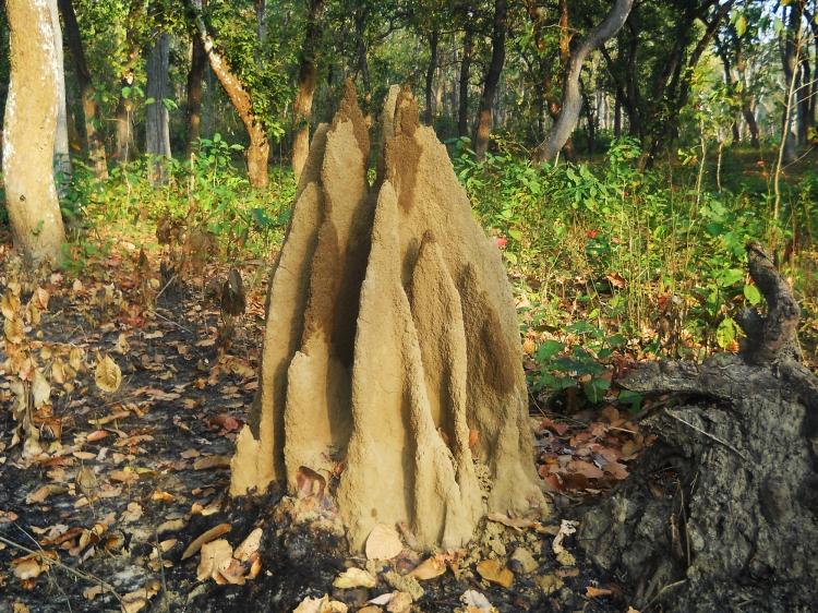 Termite Nest found at Chitwan