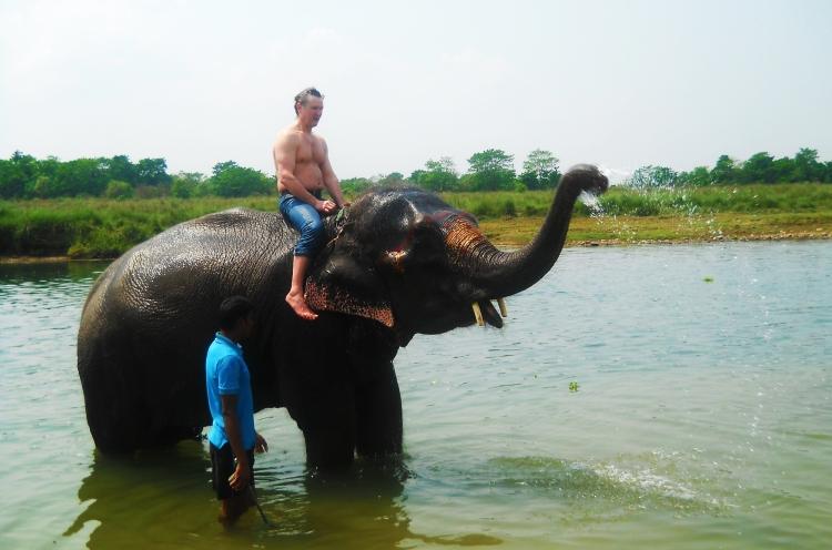 Elehpant bathing sauraha