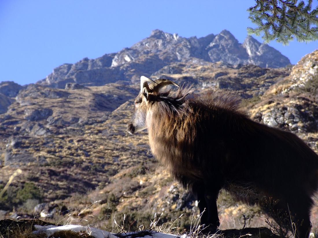 trekking in nepal himalaya pdf