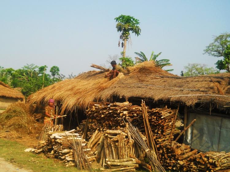 Tharu farmers stocking firewoord