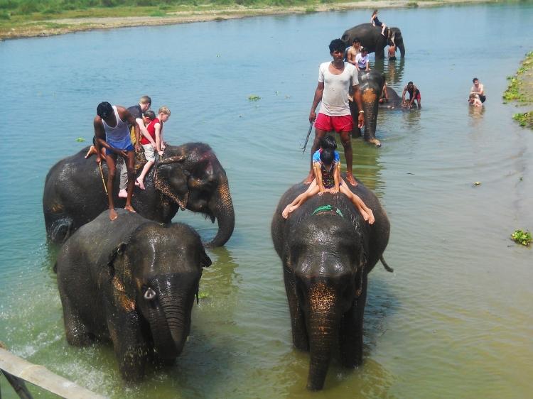 Tourists bathing elephants rapti river