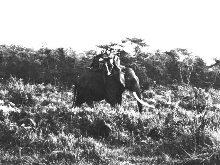 wildlife elephant safari
