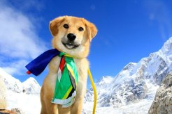 Dog climbs Everest base camp