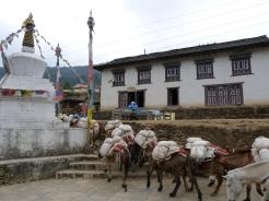 Mules carrying loads khumbu