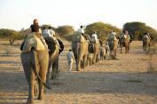 Elepahant wildlife safari