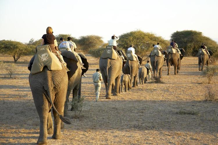 Elepahant wildlife safari
