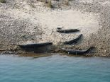 Gharial (Alligators) in Bardia