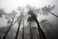 Hiking through Alpine forest at Solukhumbu