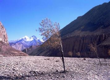 Around Annapurna Region