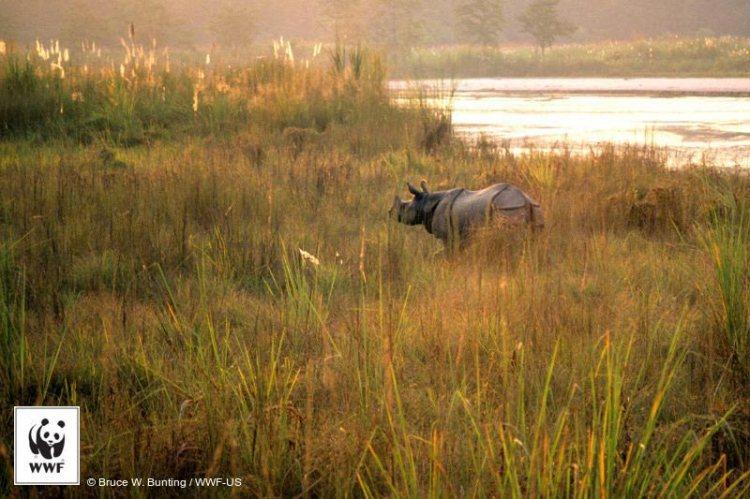 zero poaching in nepal