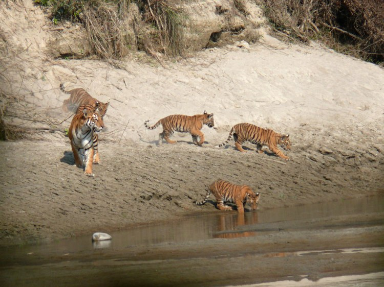 bardiya-national-park